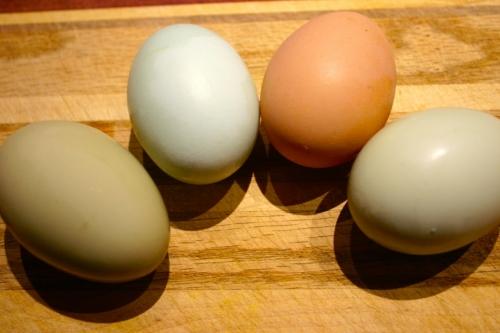 Brightside eggs.