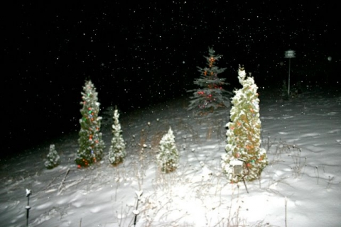 LED-lighted trees near the house