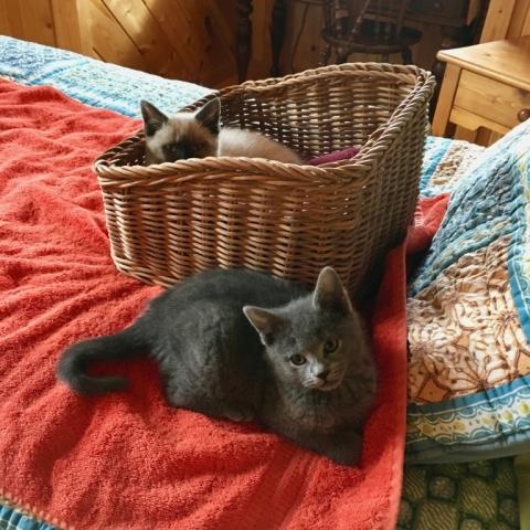 December 10. New kitties! Leia in basket and Rey.