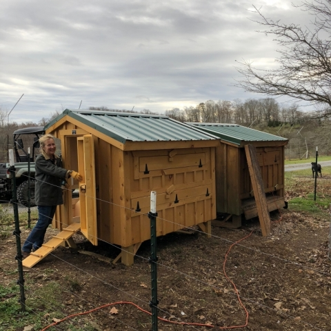 Yay! Our new, second coop is here. Now all the girls will be safe & warm this winter.