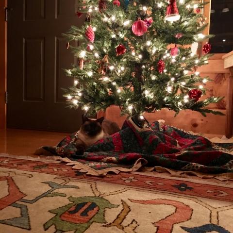 Princess Leia under the tree!