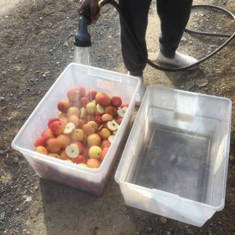 December 26. Cider-making with the last of the stored apples.