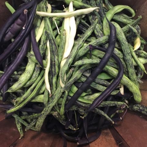 More pole beans!