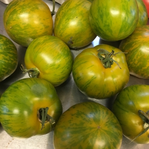 September 24. Green Zebra tomatoes.