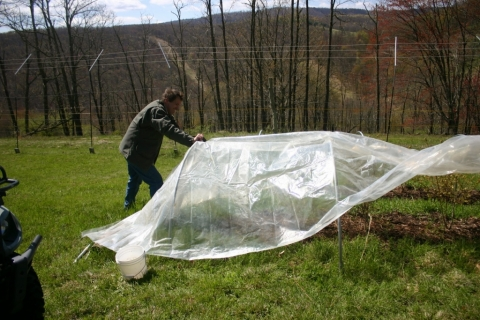 Covering the blueberry beds May 12.