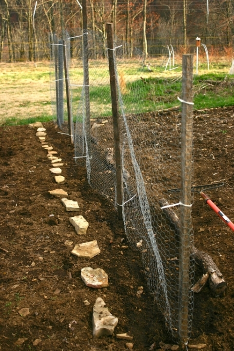 A new snow pea fence. Seeds in the ground, April 17!