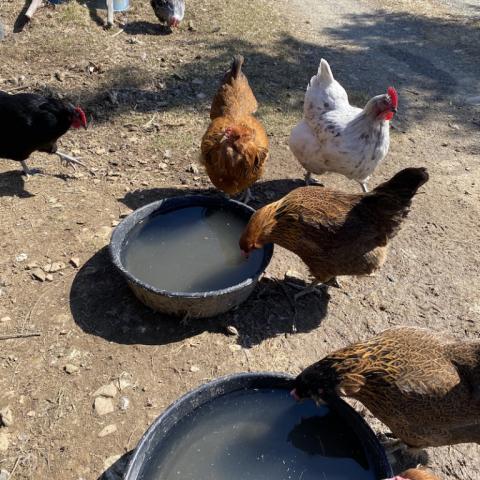Clio, Toni, Shirley, Rhoda.