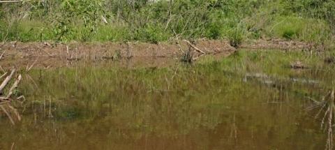 Beaver-engineered wetland lake