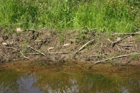 """Mud creates """"living"""" dam"""