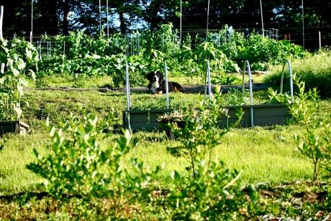 Brightside's terraced garden.