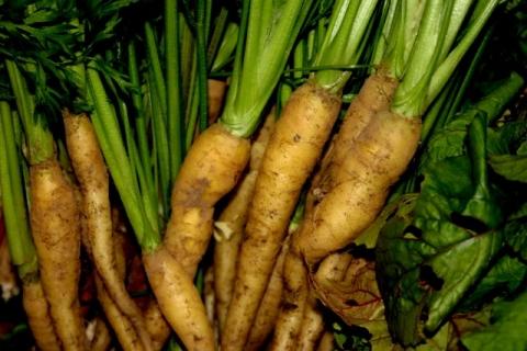 Creme de lite Carrots.