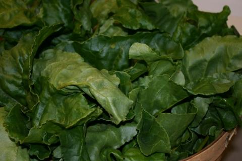 Golden beet greens.