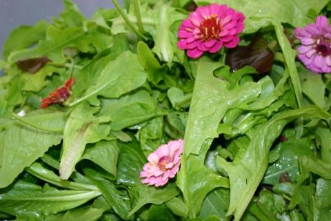 Mesclun greens & edible flowers.