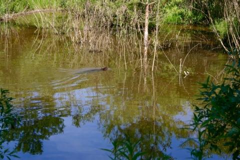July 2 Beaver Pond