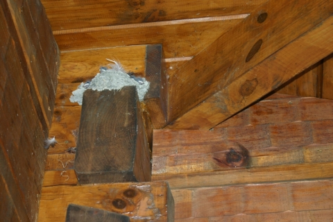 Barn Swallow Nest on Porch
