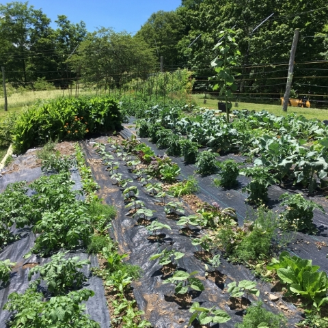 June 30. Brightside garden.