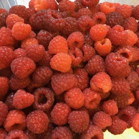 June 30. Raspberry harvest.