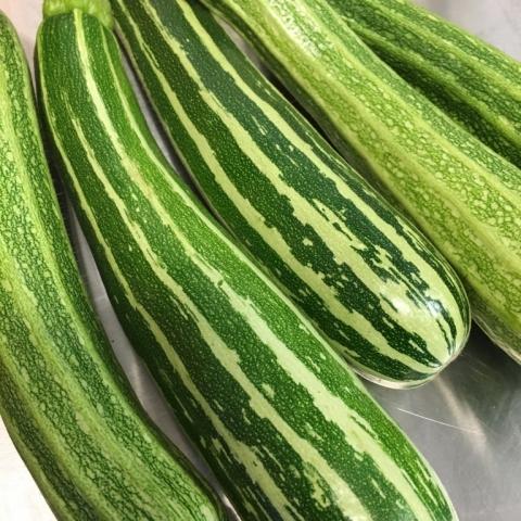 Costata Romanesco Zucchini.