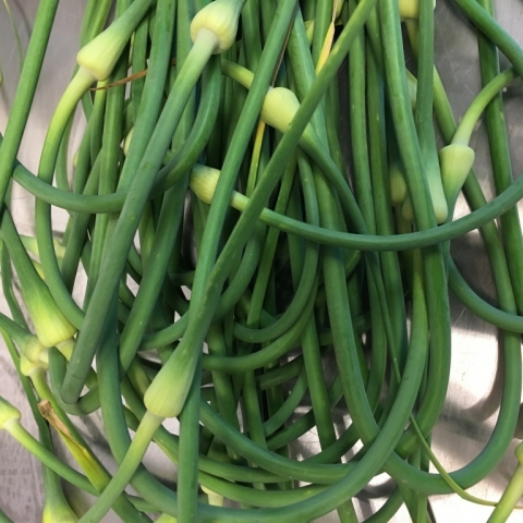 Garlic scapes.