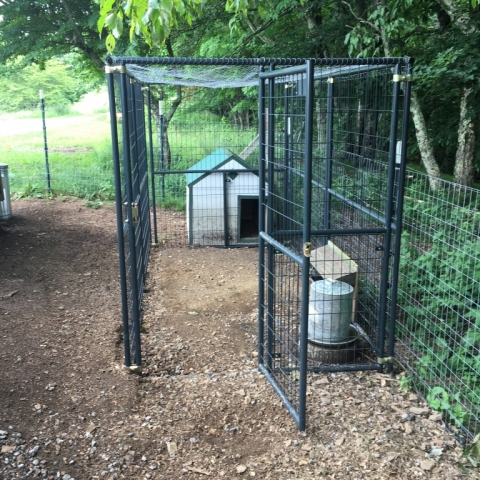 June 19. New nighttime enclosure for the ducks!