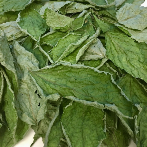 Dried Stinging Nettles.