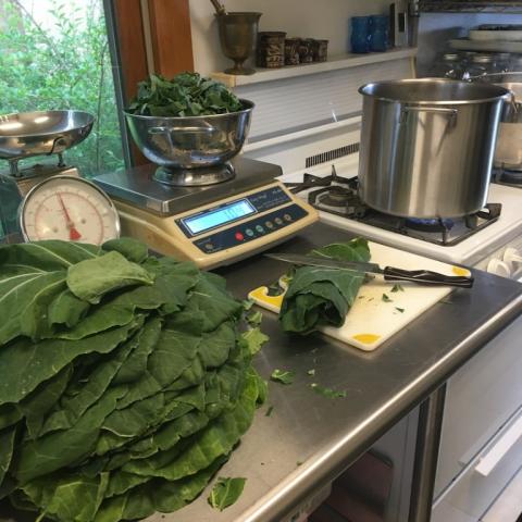 July 16. Cooking Collard Greens.