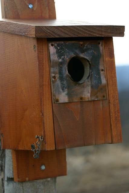 Bluebird house on the front fence