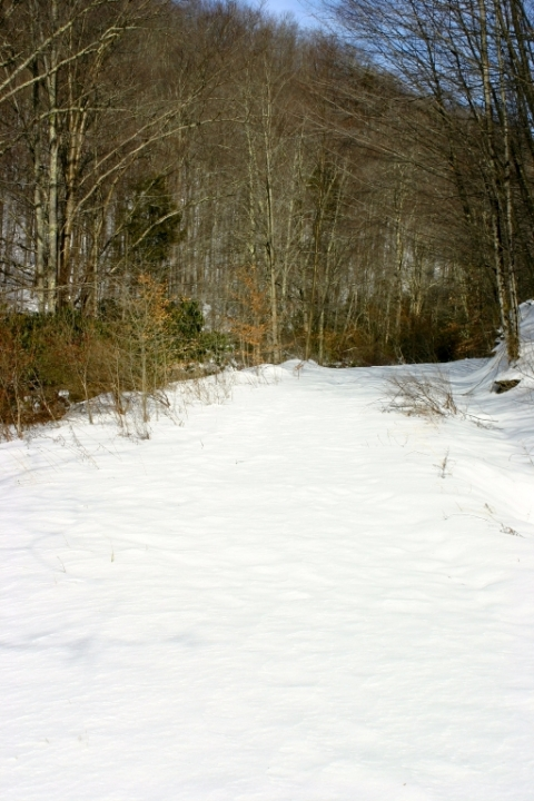 No tracks on the West Fork Rail Trail today.