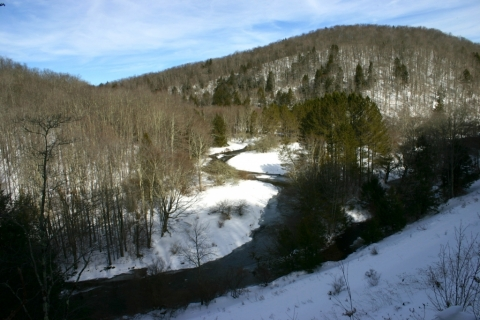 View of the West Fork from FR 44.