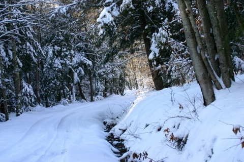 Through a Narnian wonderland, toward the sun.