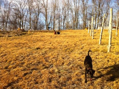 Buddy, Maddy & Dawn in the garden, January 12.