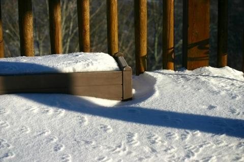 Bird tracks on the deck.