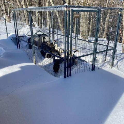 Runner Ducks snowed in!